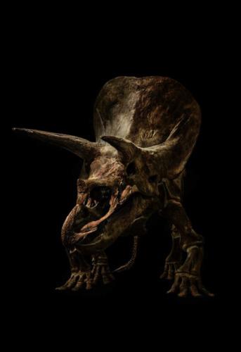 Triceratops Unio